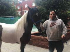 Scaffolder & Horse