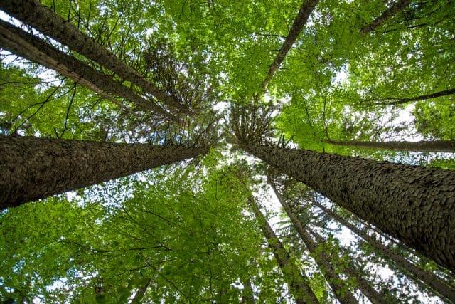 Sustainability in Scaffolding